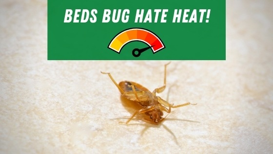 bed bugs hate heat
