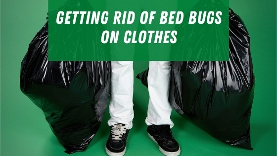 Get rid of bed bugs on clothes