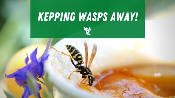 Keeping wasps away from fruit
