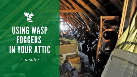 Using a wasp fogger in your attic