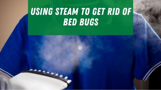 Using steam to get rid of bed bugs
