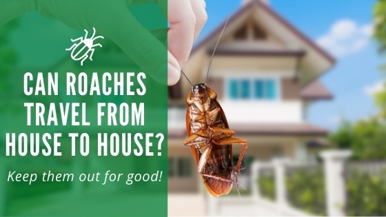 Can Roaches Travel From House to House
