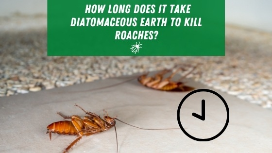 How Long Does it Take Diatomaceous Earth to Kill Roaches?