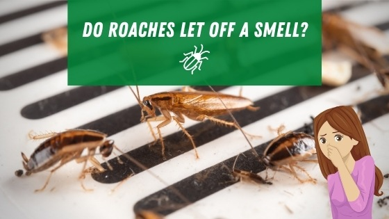 Do roaches in walls let off a smell