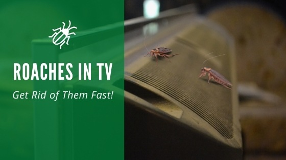 Roaches in TV