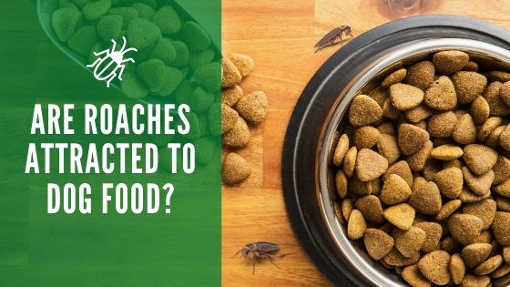 Are roaches attracted to dog food