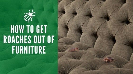 get roaches out of furniture