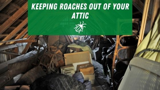 Keeping roaches out of your attic