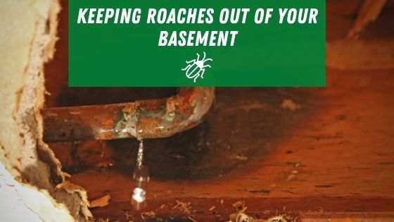 keeping roaches out of your basement
