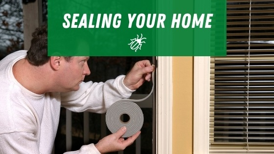 Sealing your home for roaches