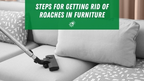 Steps for getting rid of roaches in furniture