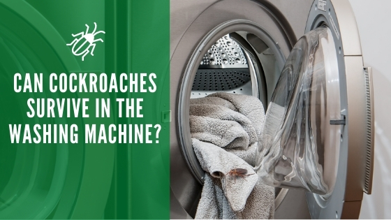 Can Cockroaches Survive in the Washing Machine