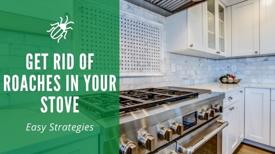 Get rid of roaches in your stove