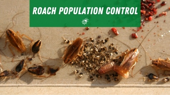 cannibal roaches population control