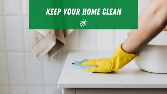 Cleaning your home for roaches