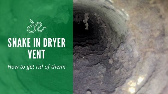 snakes in dryer vent