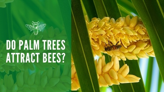 do palm trees attract bees
