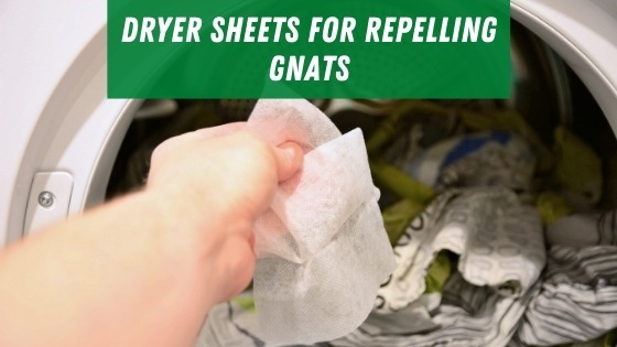 Dryer sheets for repelling gnats