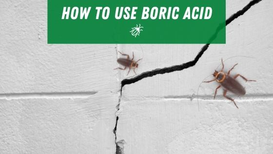 How to use boric acid for roaches