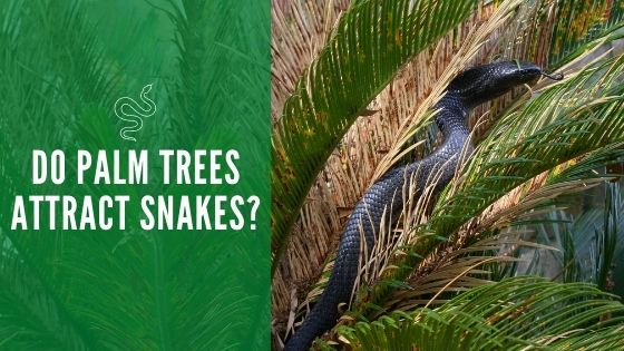 Do Palm Trees Attract Snakes