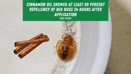 cinnamon oil for bed bugs