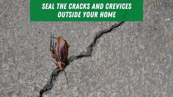 Seal cracks and crevices outside of your home