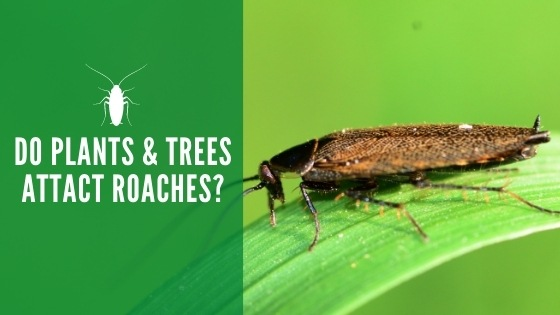Do plants and trees attract roaches