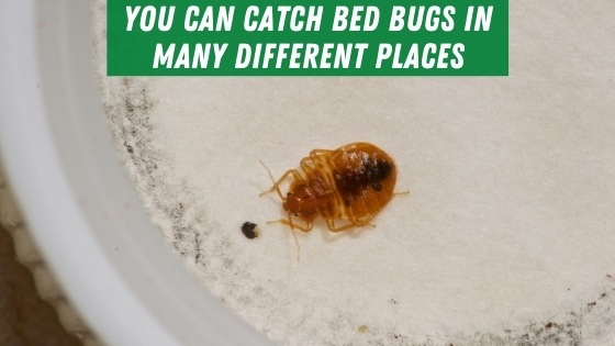 Catching bed bugs in different places