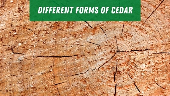 Different forms of cedar