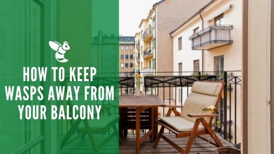 How to keep wasps away from your balcony