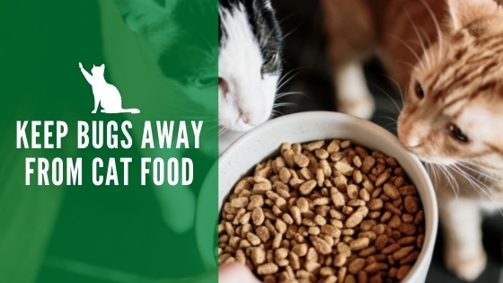 Keep bugs out of cat food