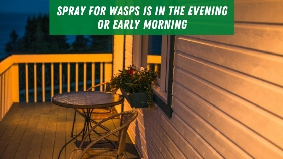 Spray for wasps in the evening or early morning
