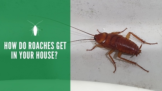 How Do Roaches Get in Your House