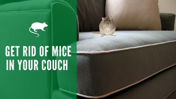 How to Get Rid of Mice in Your Couch