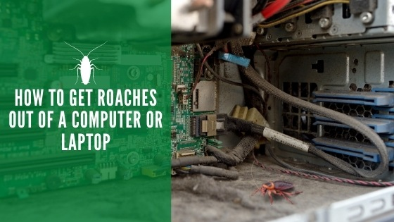 How to Get Roaches Out of a Computer or Laptop