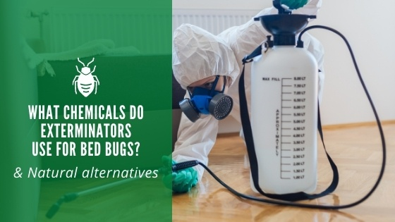 What Chemicals Do Exterminators Use for Bed Bugs