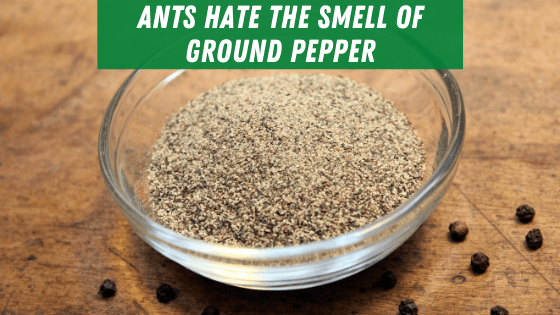 Ants hate the smell of ground pepper