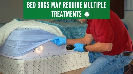 Bed bugs may require multiple treatments