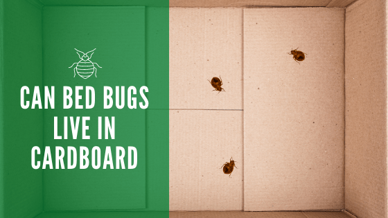 Can bed bugs live in carboard