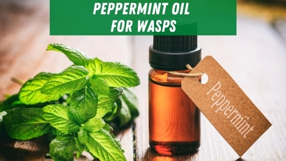 peppermint oil for wasps