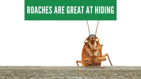 cockroaches are great at hiding