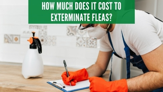 How much does it cost to exterminate fleas