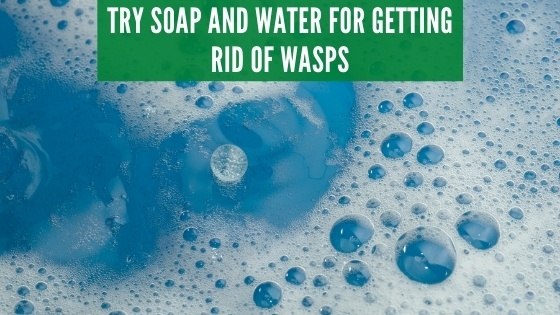 Soap and water for wasps
