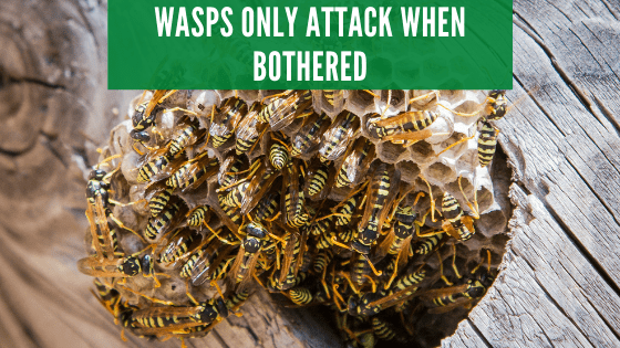 Wasps only attack when bothered